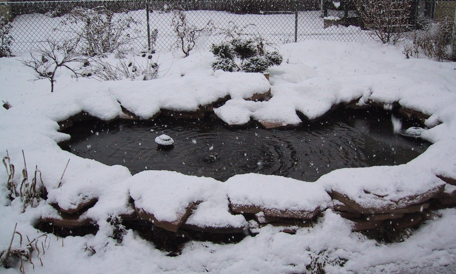 Pond ness for Keeping koi in a small pond